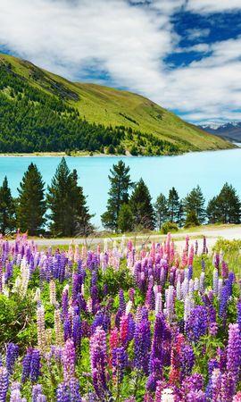 46147 скачать обои Растения, Пейзаж, Природа, Горы - заставки и картинки бесплатно