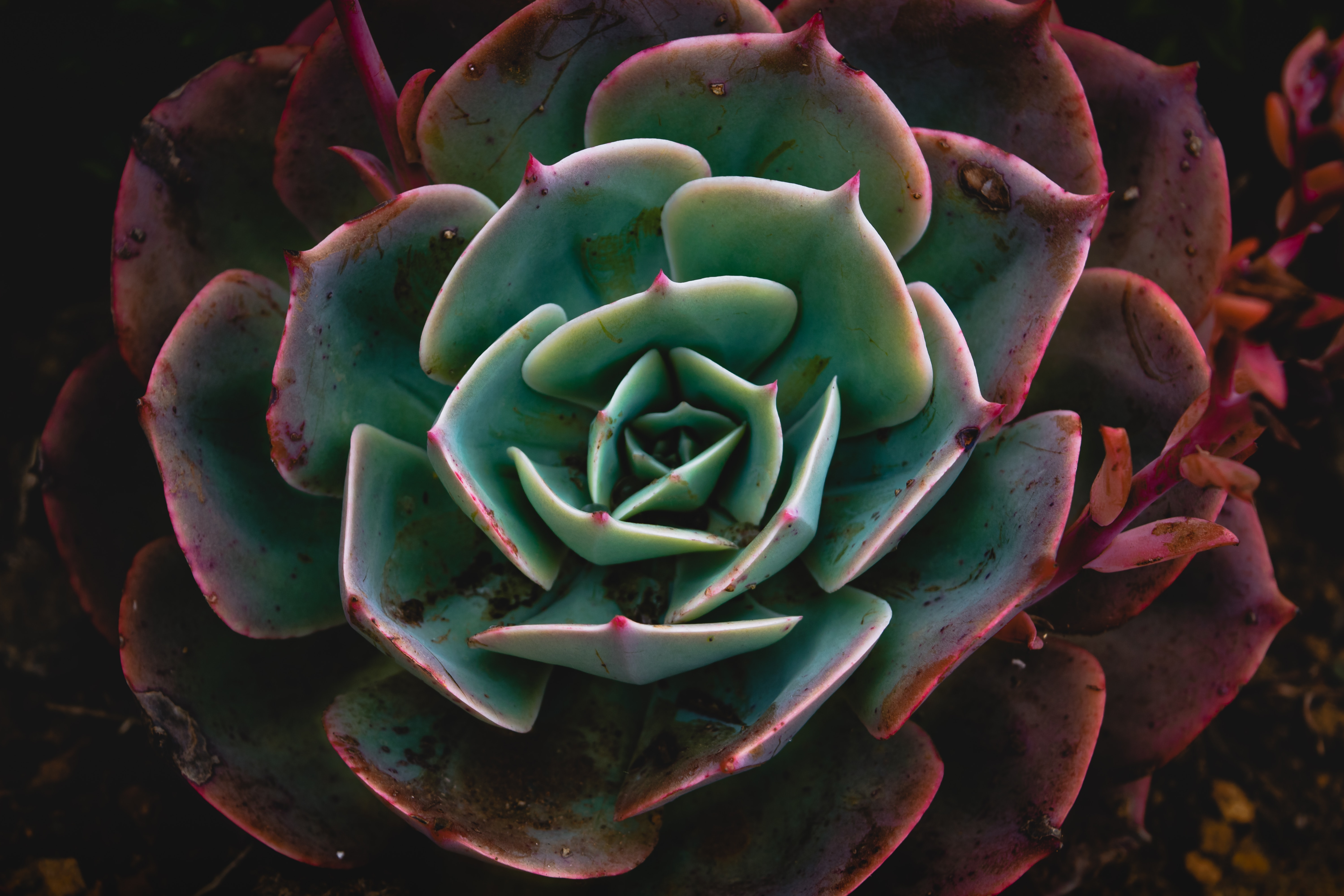 Popular Succulent images for mobile phone