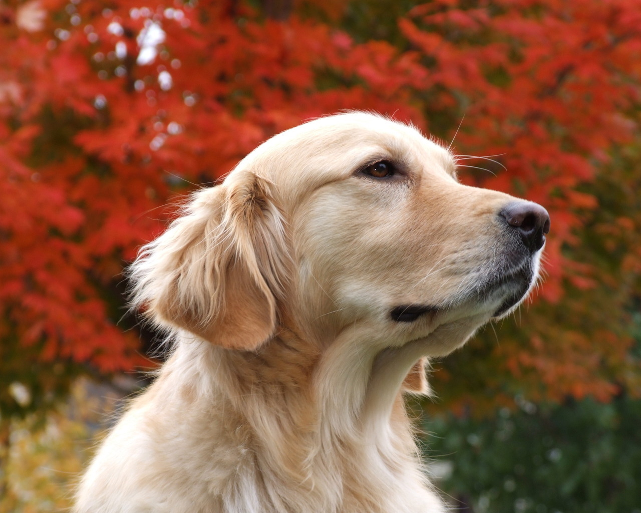 13309 download wallpaper Animals, Dogs screensavers and pictures for free