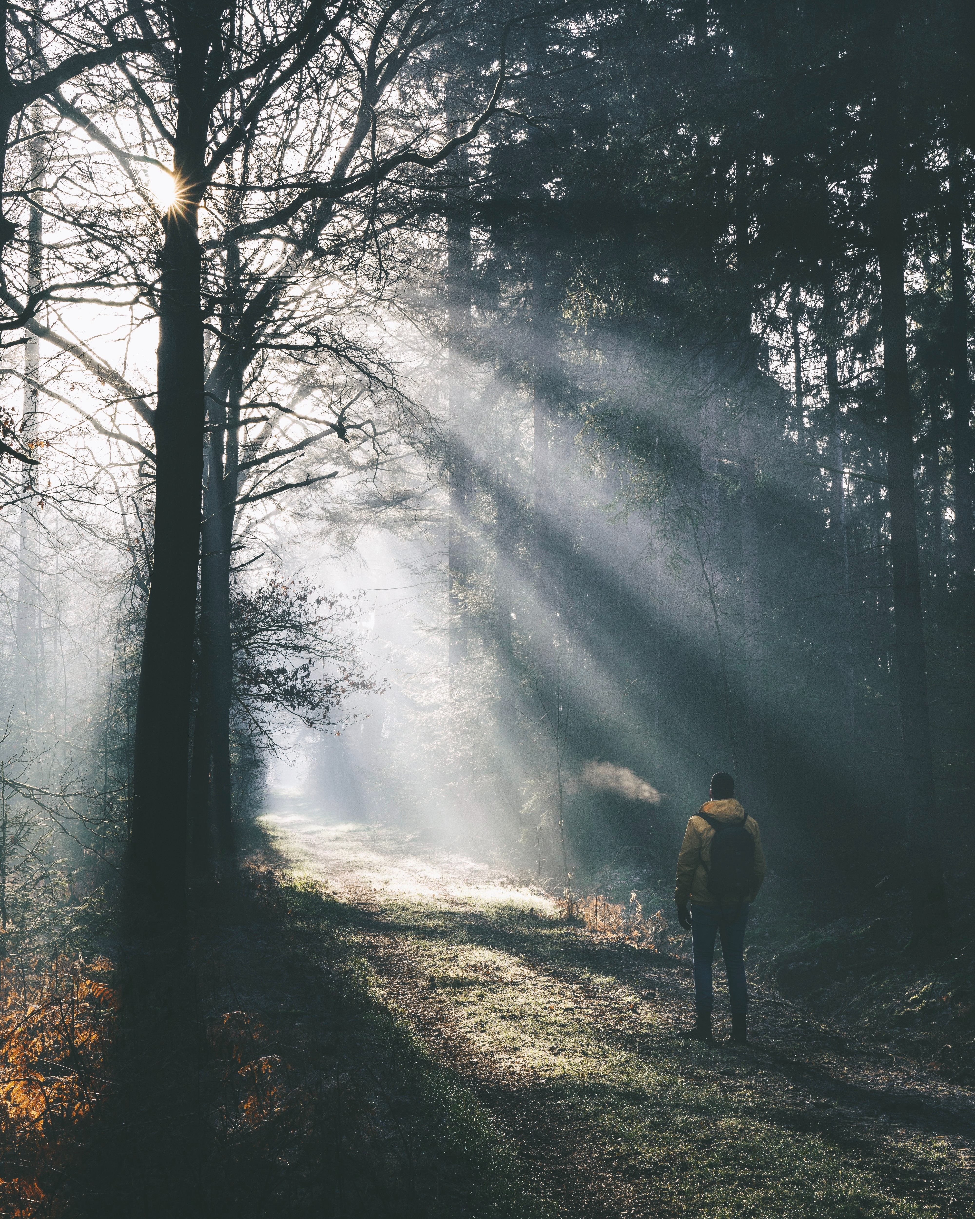 112061 download wallpaper Light, Miscellaneous, Nature, Shine, Miscellanea, Forest, Fog, Human, Person, Sunny, Solar screensavers and pictures for free