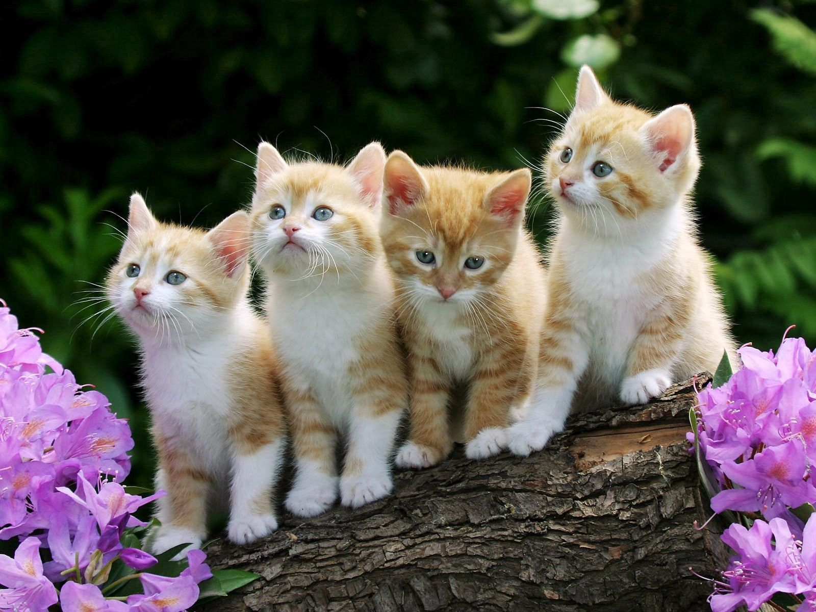 77518 Screensavers and Wallpapers Sit for phone. Download Animals, Flowers, Sit, Lot, Kittens pictures for free