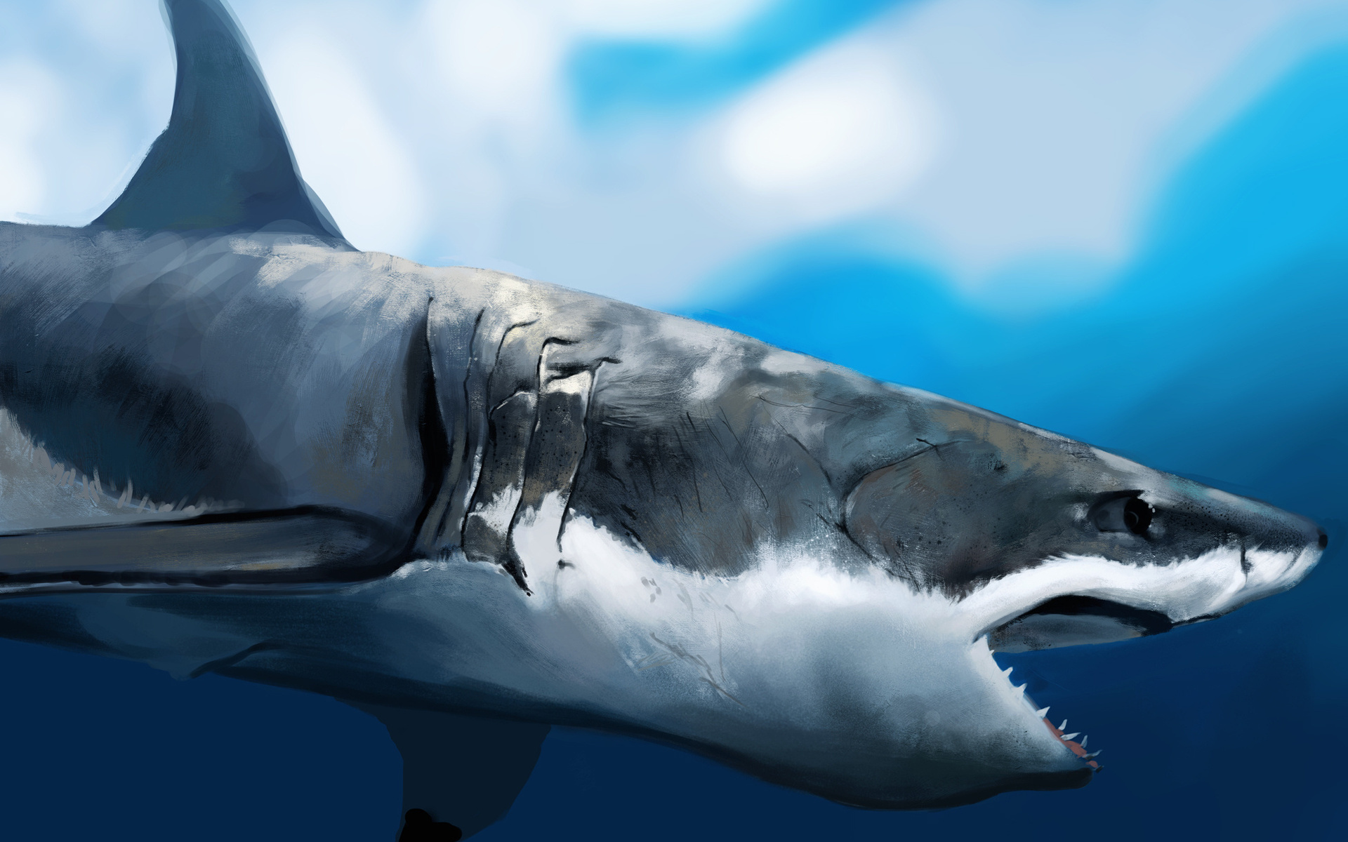 40171 download wallpaper Animals, Sharks, Pictures screensavers and pictures for free