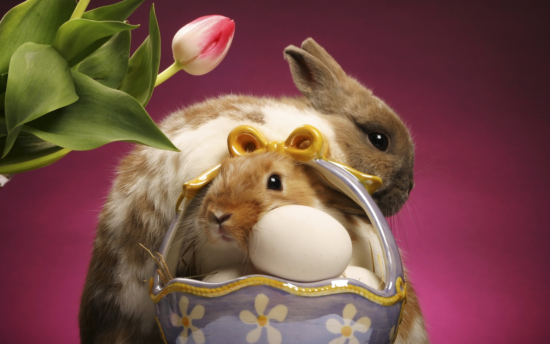 45179 Screensavers and Wallpapers Rabbits for phone. Download Animals, Rabbits pictures for free
