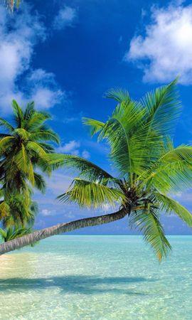 34529 скачать обои Пейзаж, Море, Пальмы - заставки и картинки бесплатно