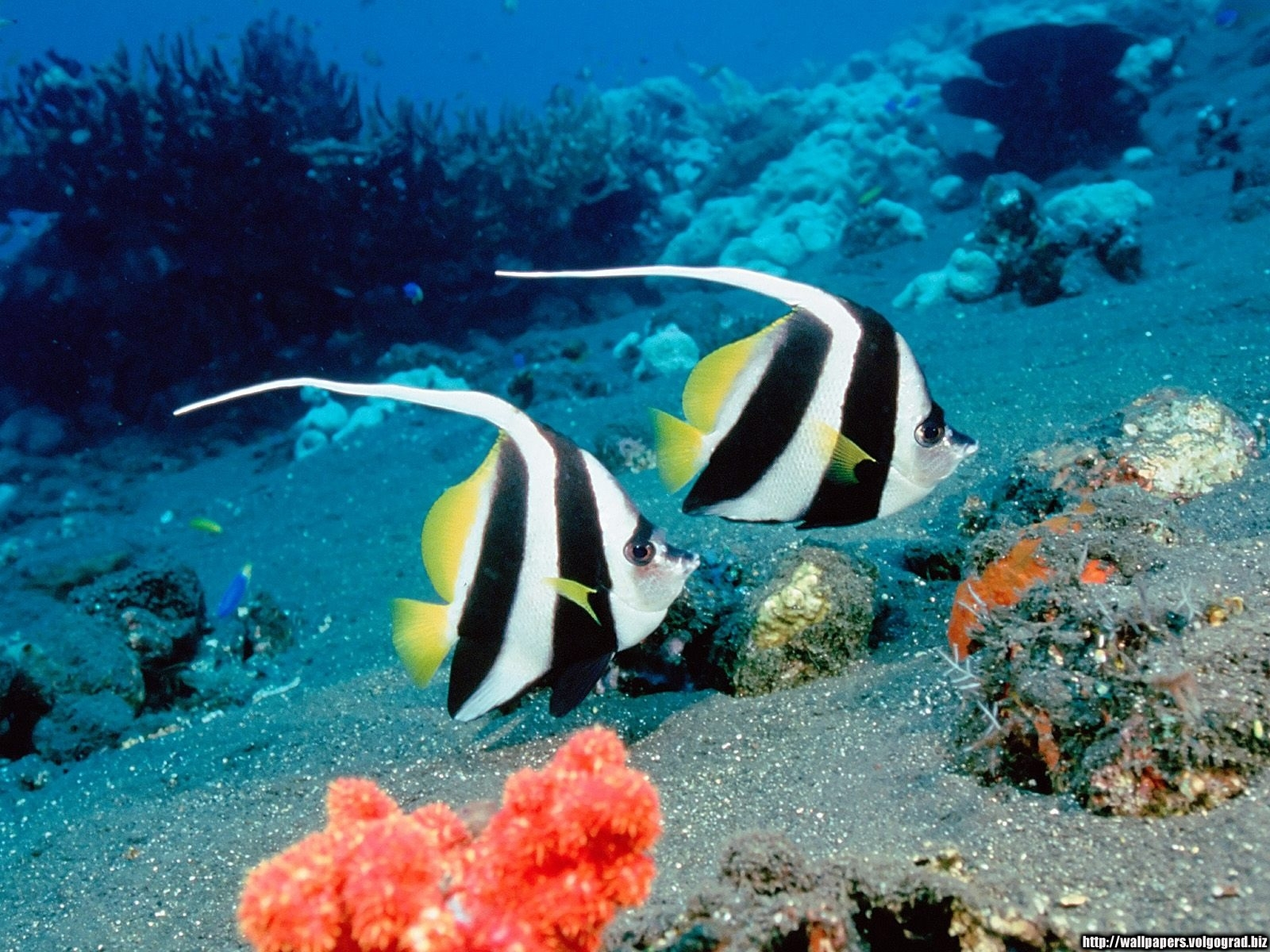 1885 download wallpaper Animals, Sea, Fishes screensavers and pictures for free