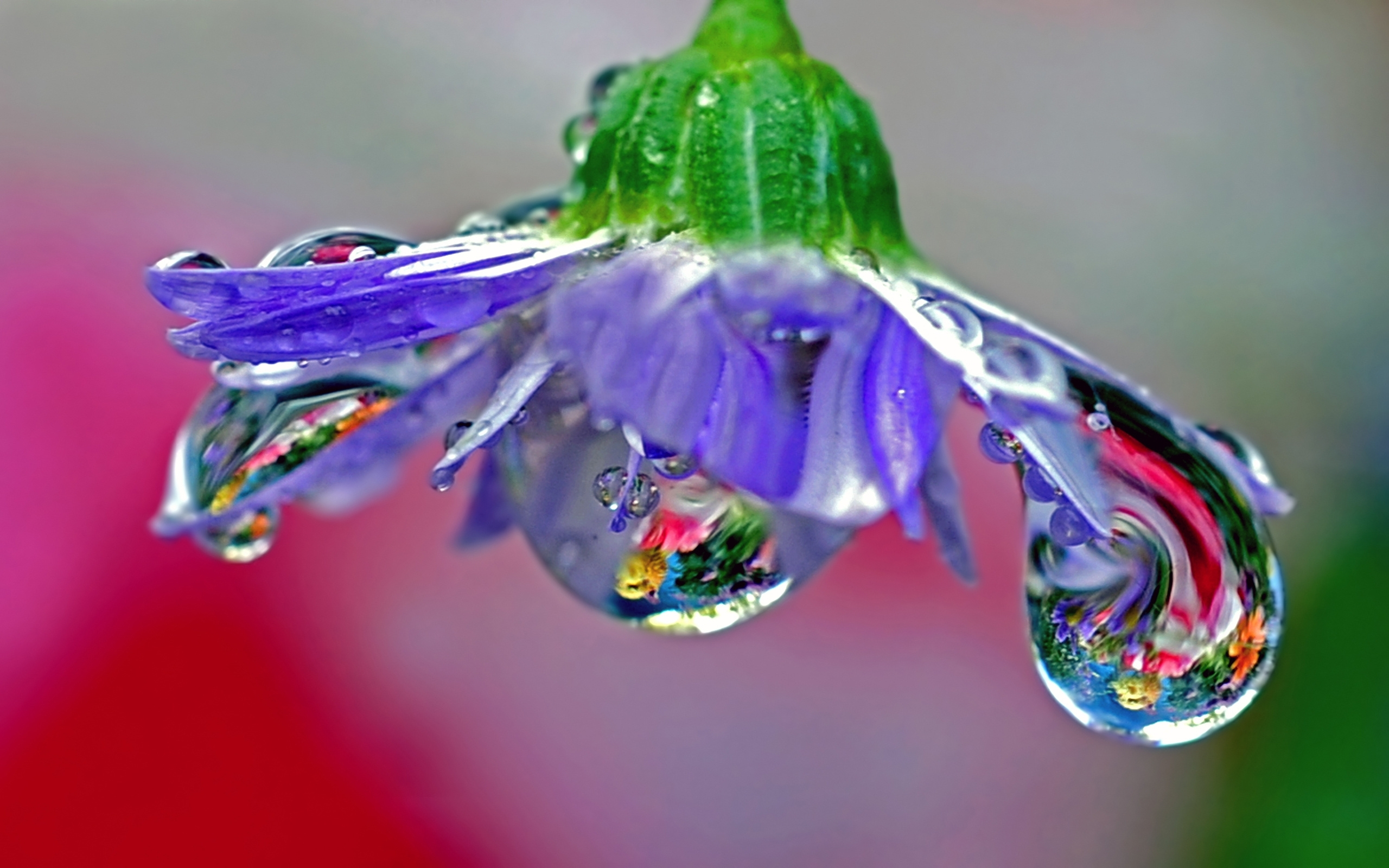 26732 download wallpaper Plants, Flowers, Drops screensavers and pictures for free