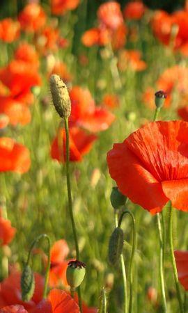 44681 télécharger le fond d'écran Plantes, Fleurs - économiseurs d'écran et images gratuitement