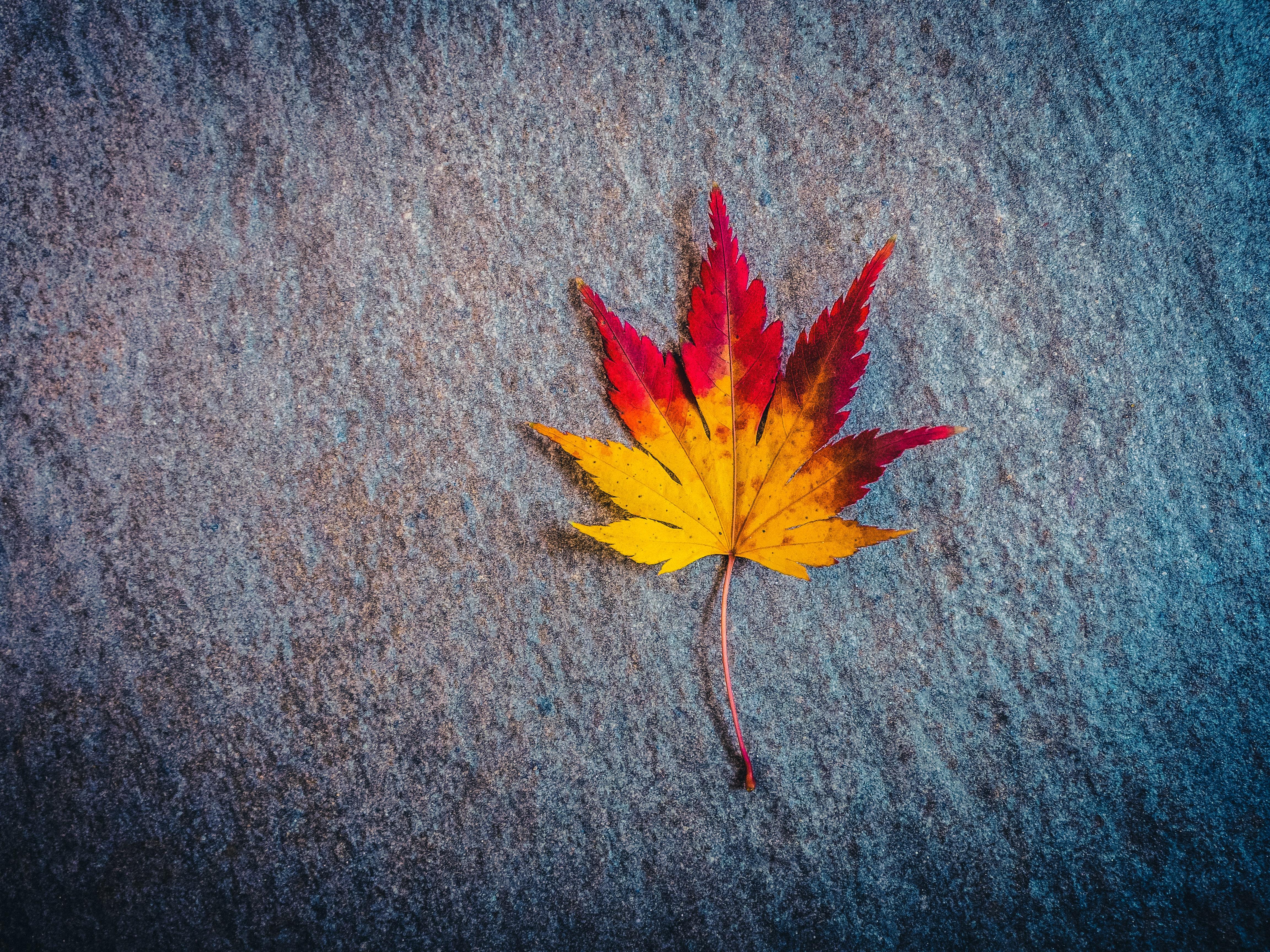 115902 скачать обои Разное, Лист, Кленовый, Осень, Минимализм - заставки и картинки бесплатно