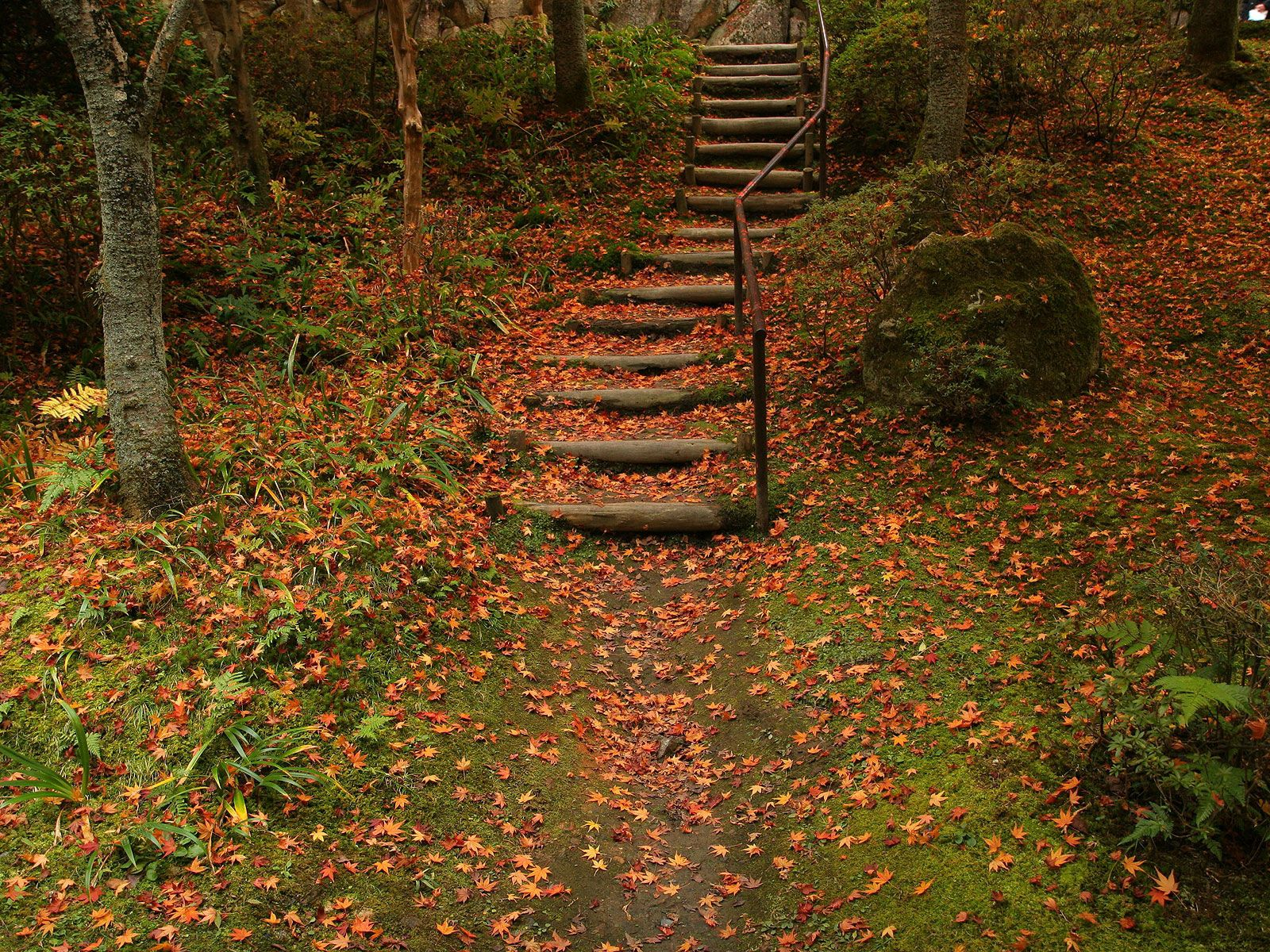 56044 Screensavers and Wallpapers Foliage for phone. Download Nature, Autumn, Stairs, Ladder, Foliage pictures for free