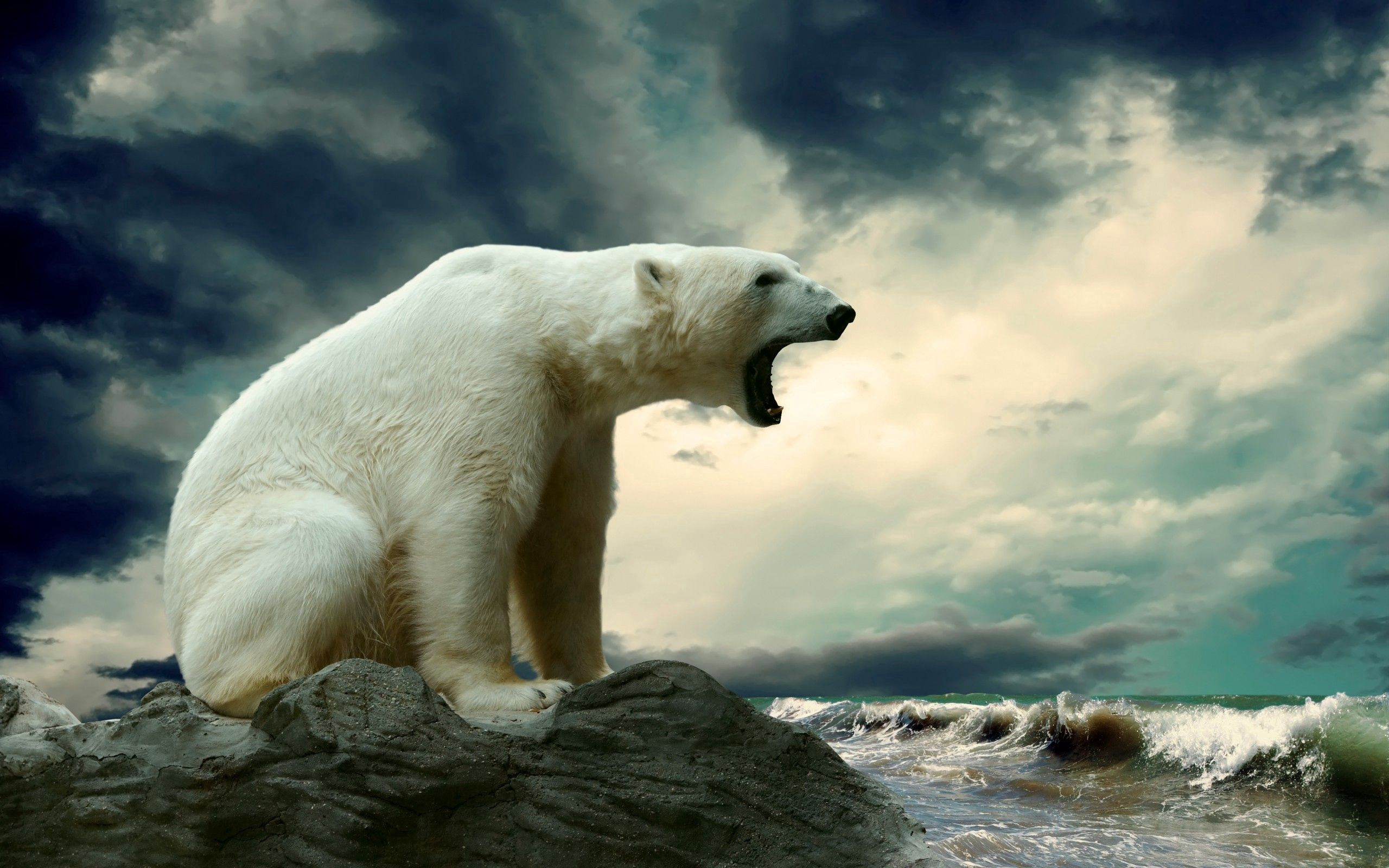 65994 download wallpaper Animals, Water, Sit, Fat, Thick, Polar Bear screensavers and pictures for free