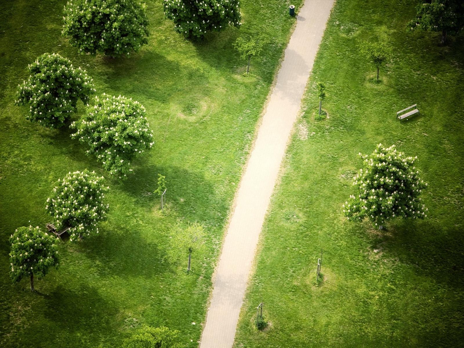 7554 скачать обои Пейзаж, Деревья, Дороги - заставки и картинки бесплатно