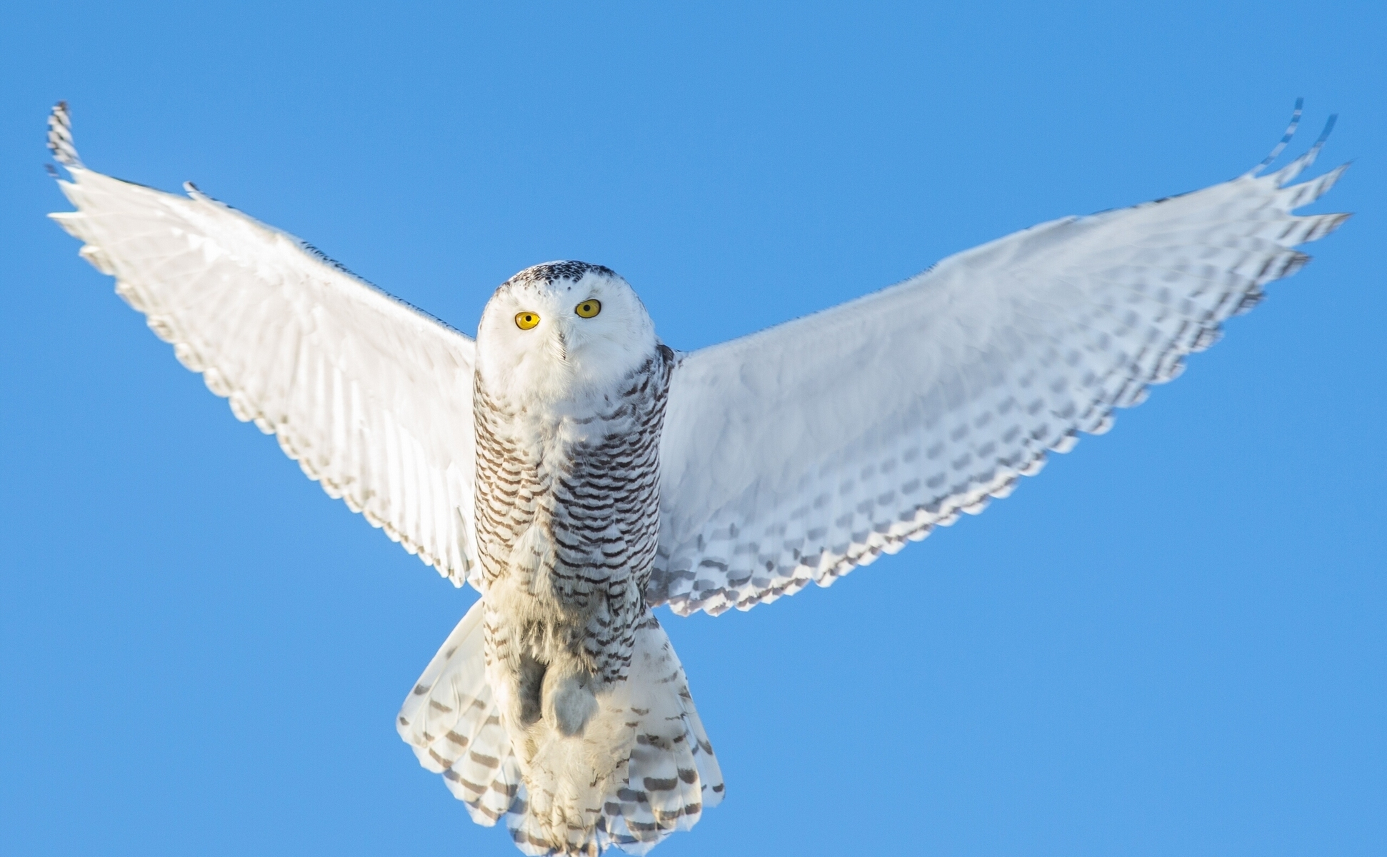 65250 Screensavers and Wallpapers Owl for phone. Download Animals, Owl, Flight, Sky, Predator, Wings pictures for free