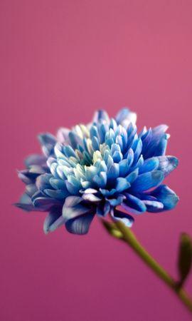 5623 скачать обои Растения, Цветы - заставки и картинки бесплатно