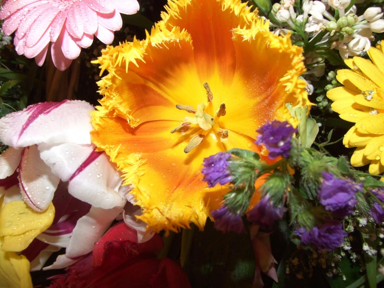 6434 скачать обои Растения, Цветы - заставки и картинки бесплатно