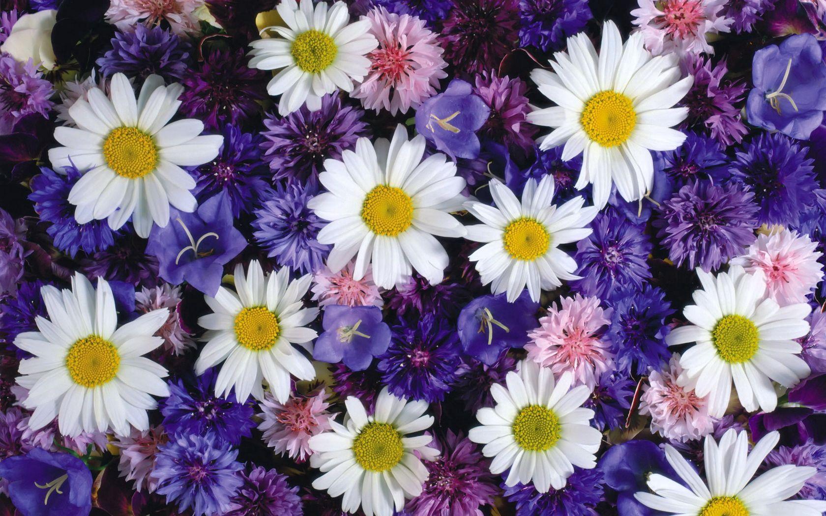 71418 скачать обои Цветы, Ромашки, Васильки, Колокольчики, Яркие - заставки и картинки бесплатно