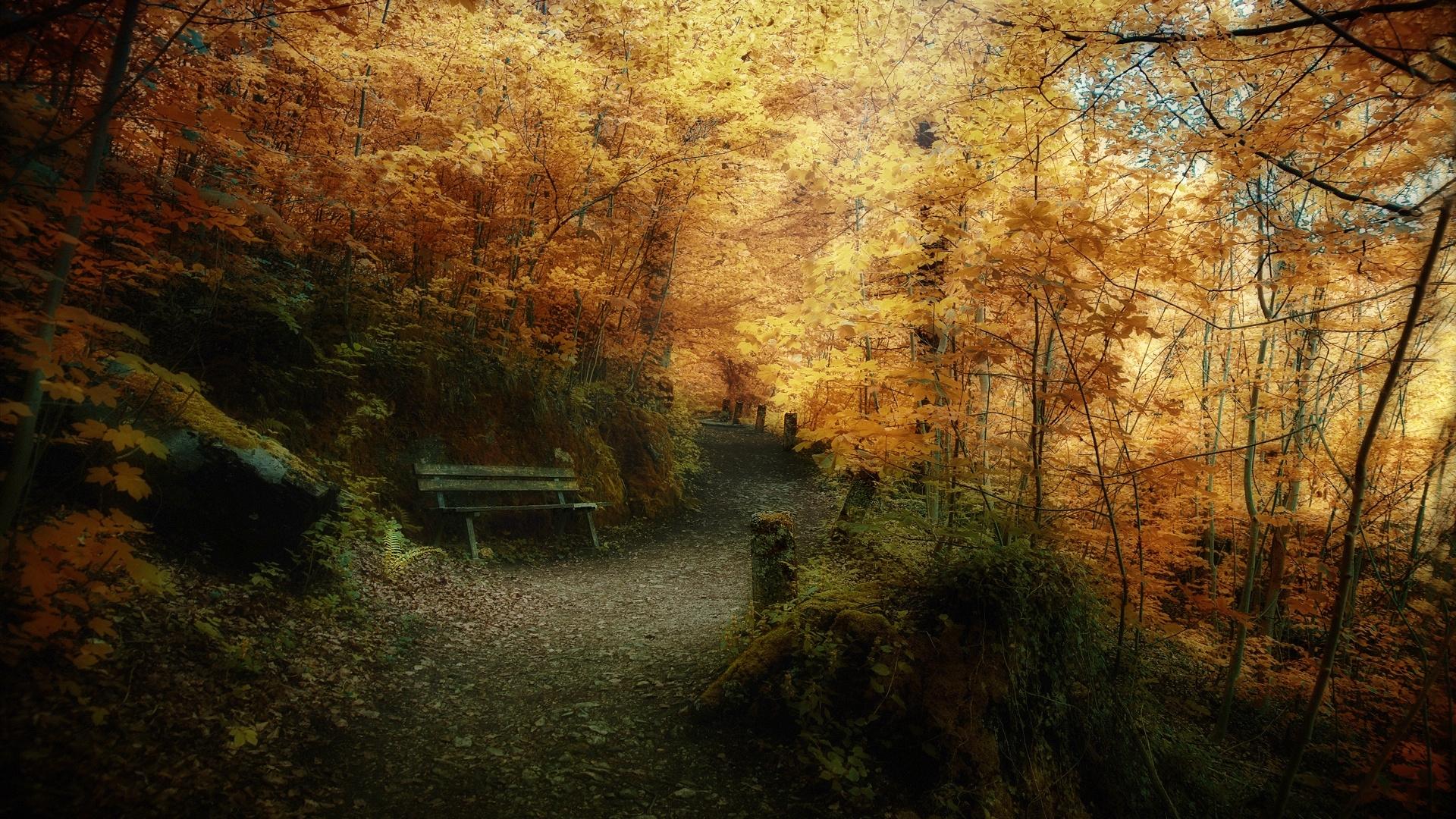 24872 скачать обои Пейзаж, Деревья, Дороги, Осень - заставки и картинки бесплатно