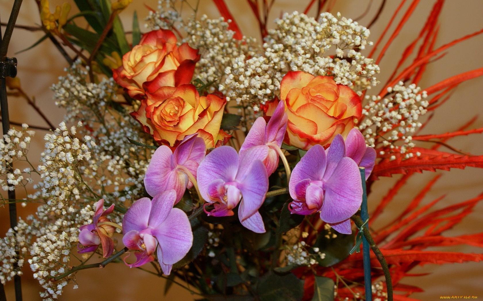 28219 скачать обои Растения, Цветы, Букеты - заставки и картинки бесплатно