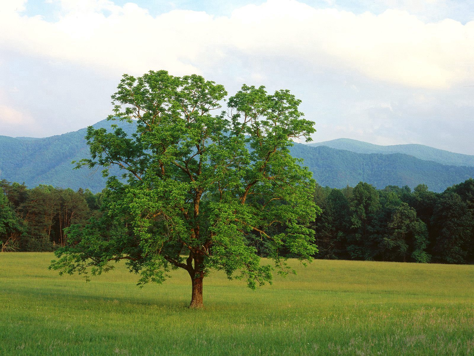 125914 download wallpaper Nature, Wood, Tree, Field, Lonely, Summer, Branches, Branch, Forest, Mountains screensavers and pictures for free