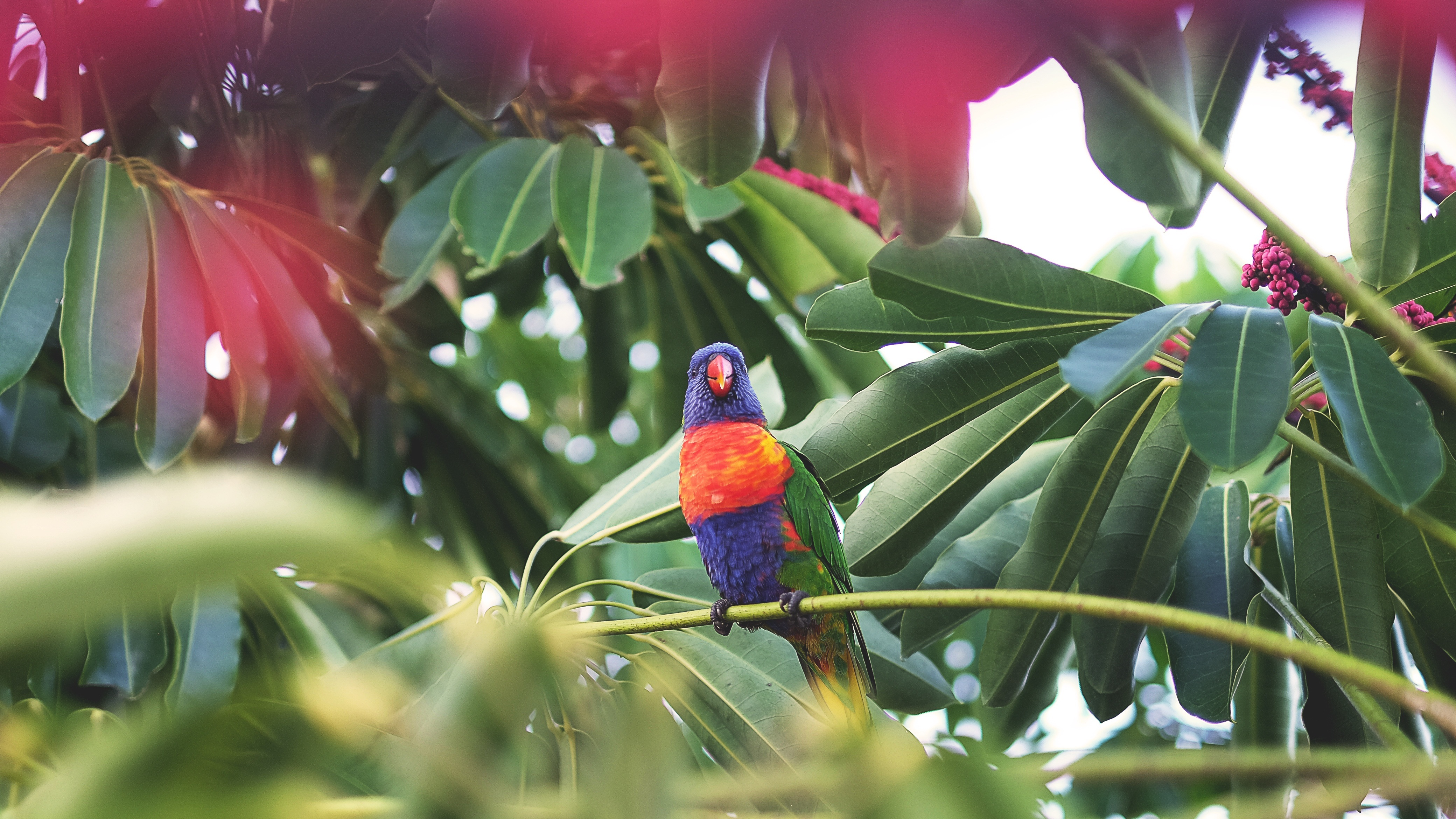 60525 Screensavers and Wallpapers Parrots for phone. Download Parrots, Animals, Bird, Tropics pictures for free