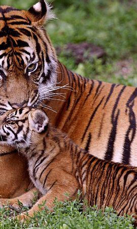 48591壁紙のダウンロード動物, 阪神タイガース-スクリーンセーバーと写真を無料で