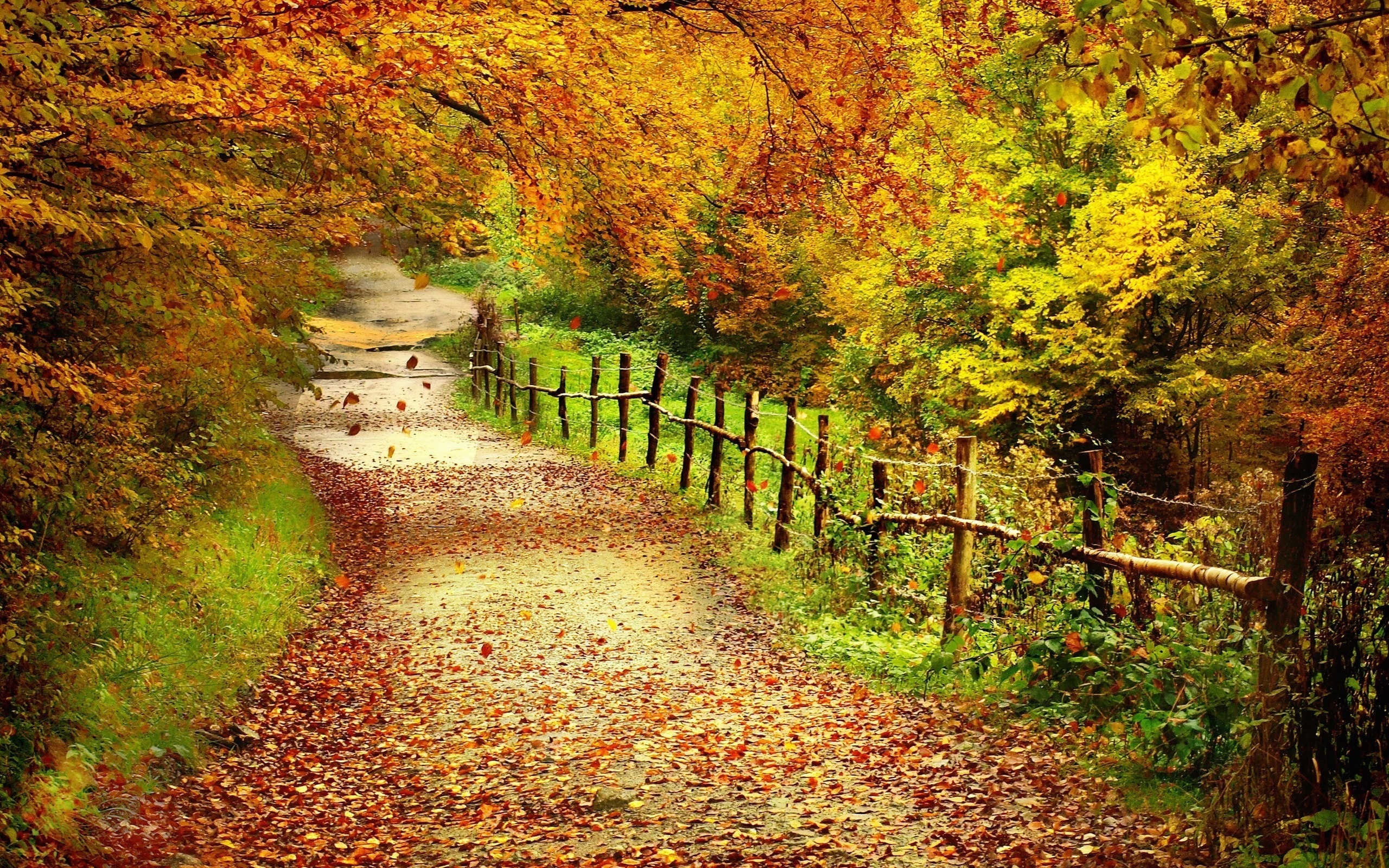 Download mobile wallpaper Autumn, Trees, Roads, Landscape for free.