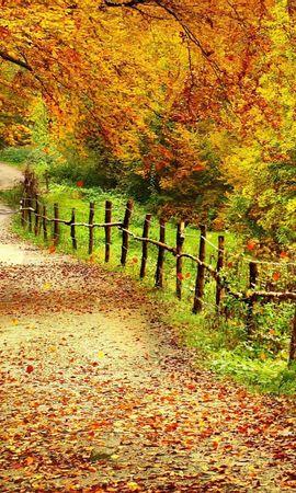 28281 скачать обои Пейзаж, Деревья, Дороги, Осень - заставки и картинки бесплатно