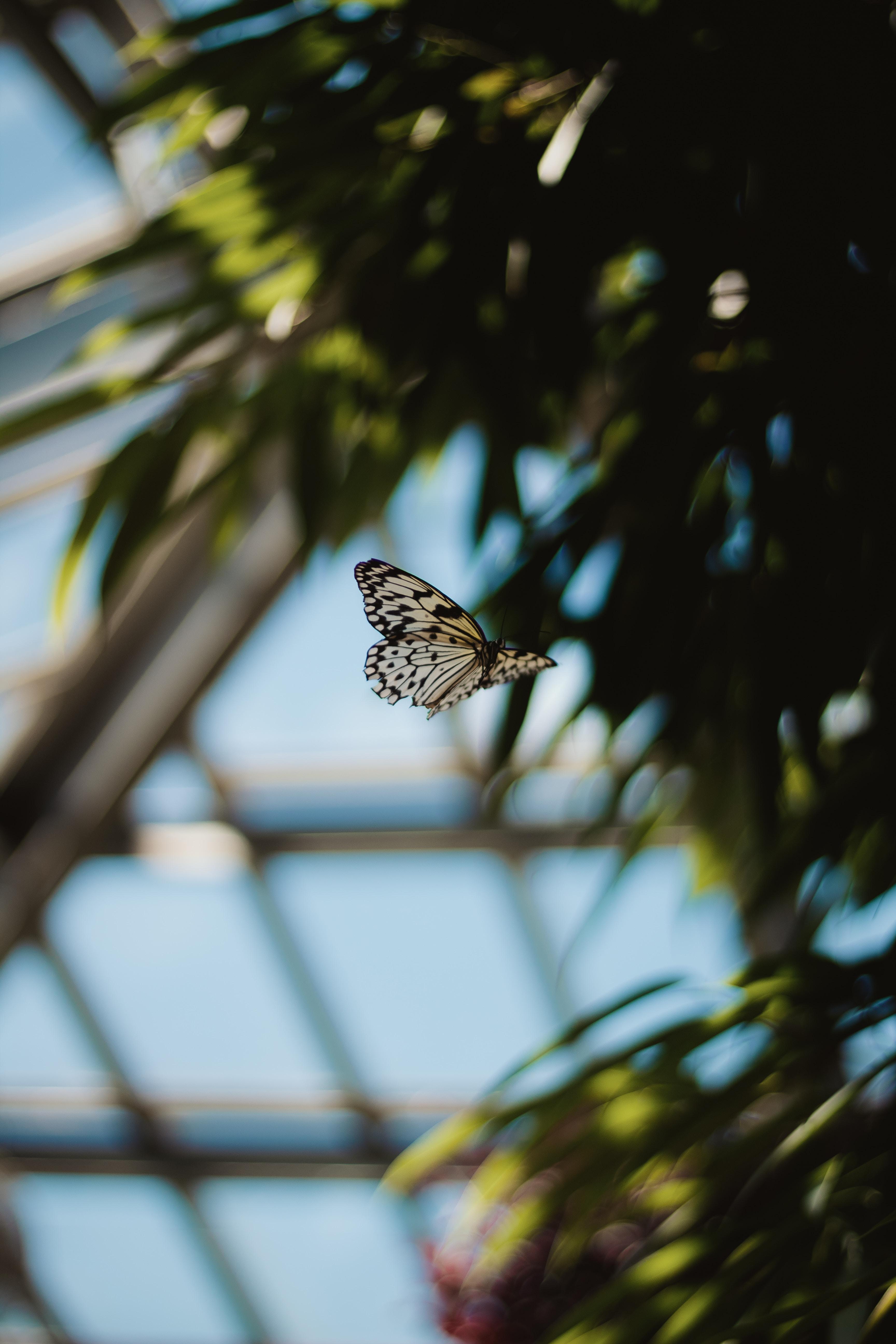 手機的61492屏保和壁紙昆虫。 免費下載 宏, 蝴蝶, 斑, 斑点, 苍蝇, 飞行, 昆虫, 鳞翅目, 鳞片, 翅膀 圖片