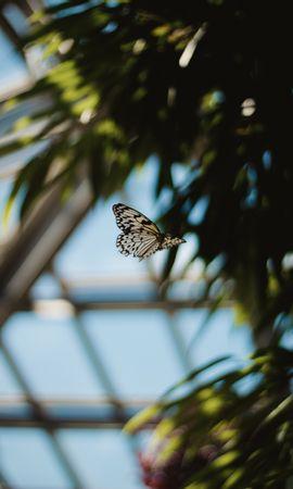 お使いの携帯電話の61492スクリーンセーバーと壁紙昆虫。 大きい, マクロ, バタフライ, 蝶, 発見, むら, ハエ, 蠅, 昆虫, 鱗翅目, うろこ状の翼, 翼の写真を無料でダウンロード