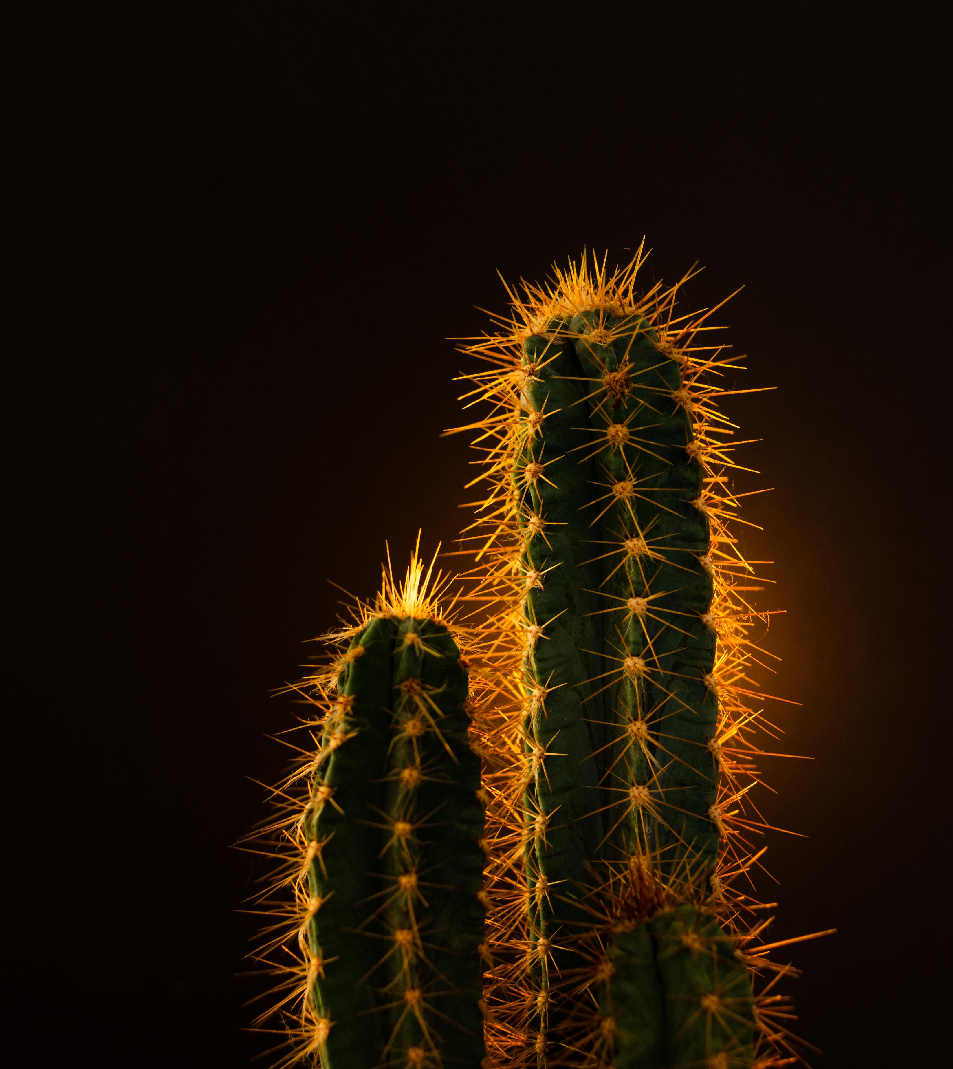 120411 Заставки и Обои Иголки на телефон. Скачать Природа, Иголки, Растение, Кактус картинки бесплатно