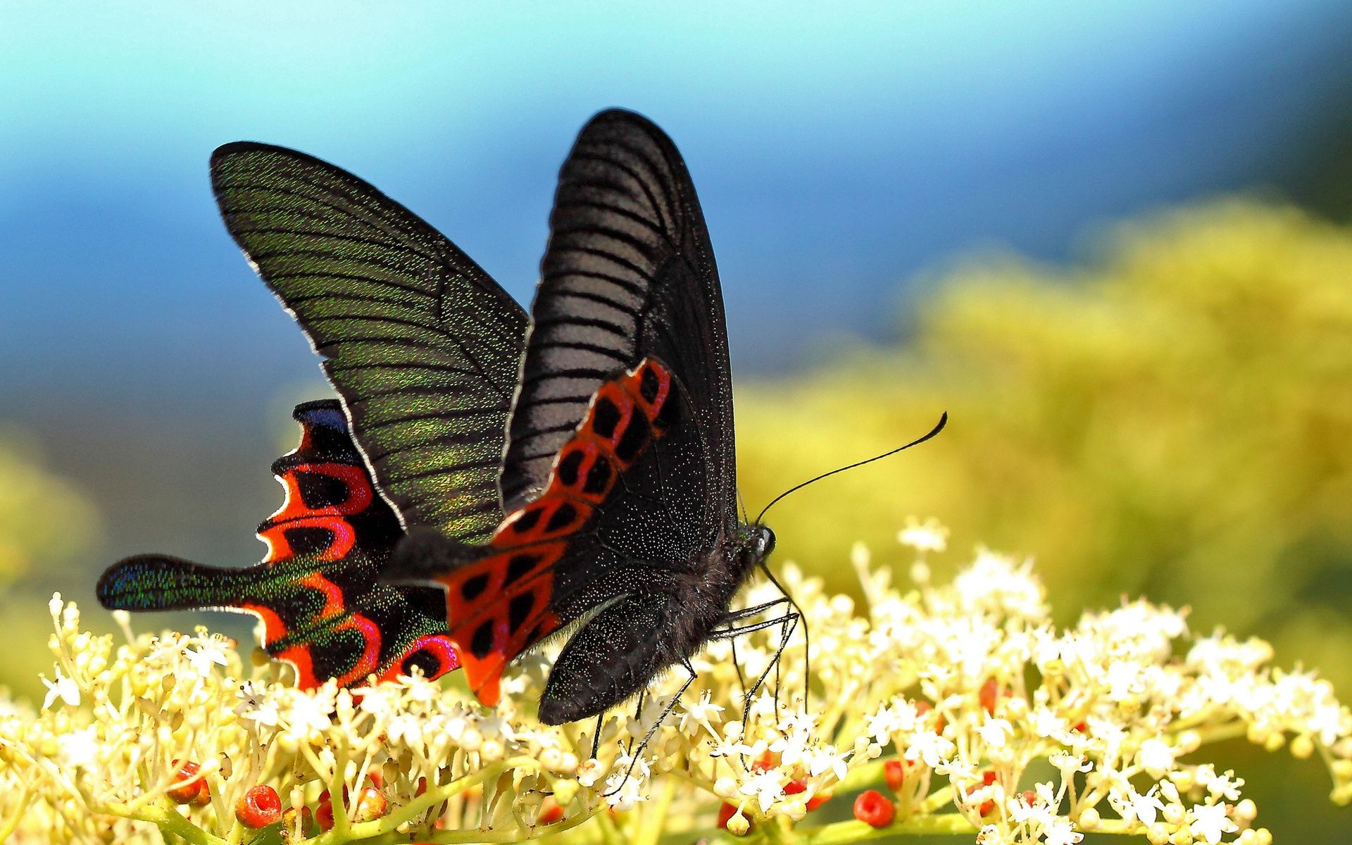 117333 Screensavers and Wallpapers Butterfly for phone. Download Grass, Macro, Pattern, Butterfly, Wings pictures for free