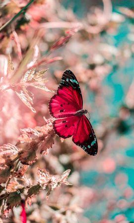 お使いの携帯電話の51552スクリーンセーバーと壁紙昆虫。 大きい, マクロ, バタフライ, 蝶, 翼, 昆虫, 草, 明るいの写真を無料でダウンロード