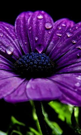 25261 скачать обои Растения, Цветы, Капли - заставки и картинки бесплатно
