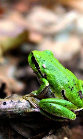 26634 baixar papel de parede Jogos, Frogs - protetores de tela e imagens gratuitamente