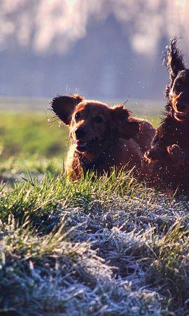 46486 baixar papel de parede Animais, Cães - protetores de tela e imagens gratuitamente