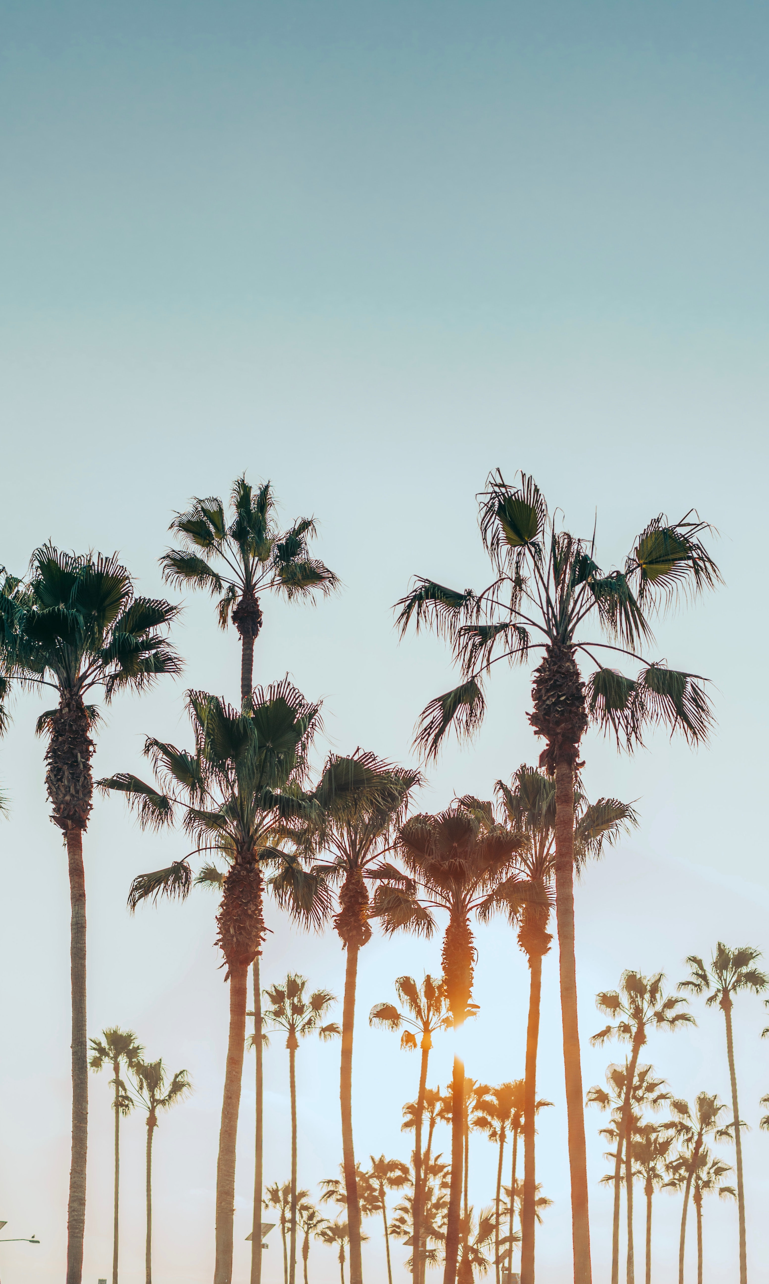 73137 download wallpaper Nature, Summer, Tropics, Sun, Palms screensavers and pictures for free