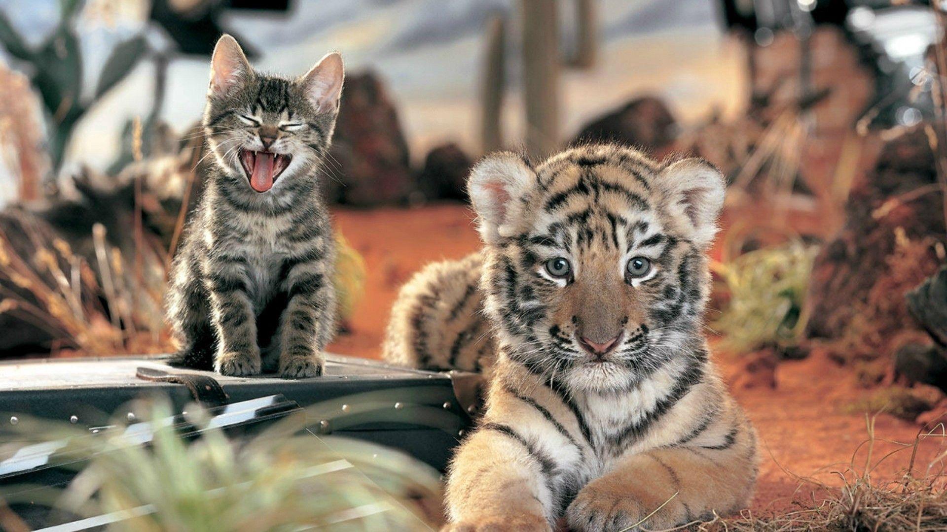 Die besten Tiger-Hintergründe für den Telefonbildschirm