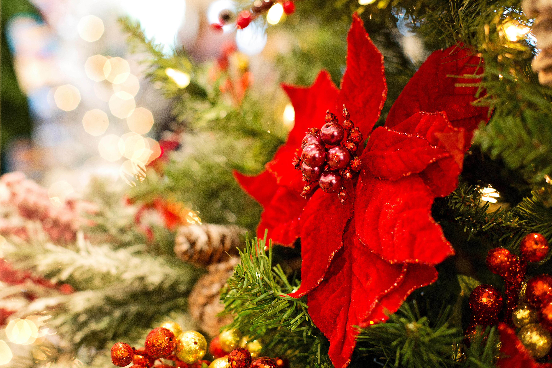 90348 Salvapantallas y fondos de pantalla Año Nuevo en tu teléfono. Descarga imágenes de Vacaciones, Poinsettia, Poinsity, Flor, Decoración, Hojas, Árbol De Navidad, Navidad, Año Nuevo, Festivo gratis