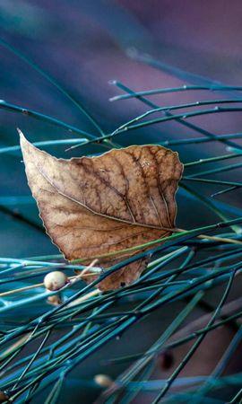 23194 скачать обои Растения, Осень, Листья - заставки и картинки бесплатно