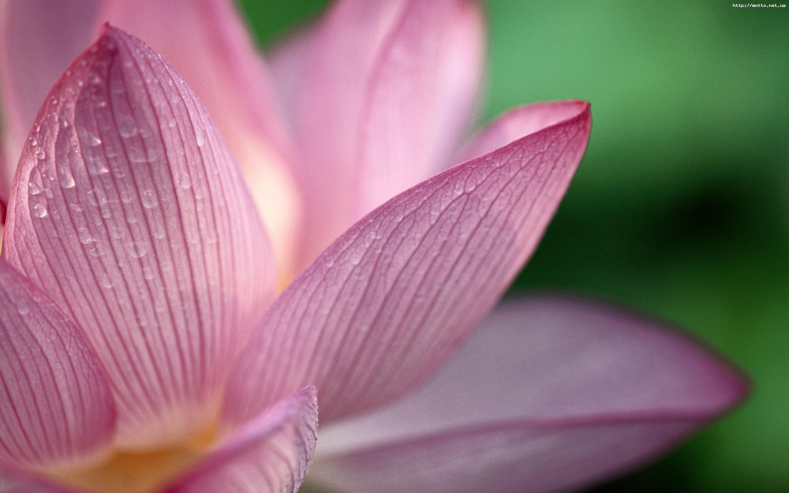7868 скачать обои Растения, Цветы - заставки и картинки бесплатно