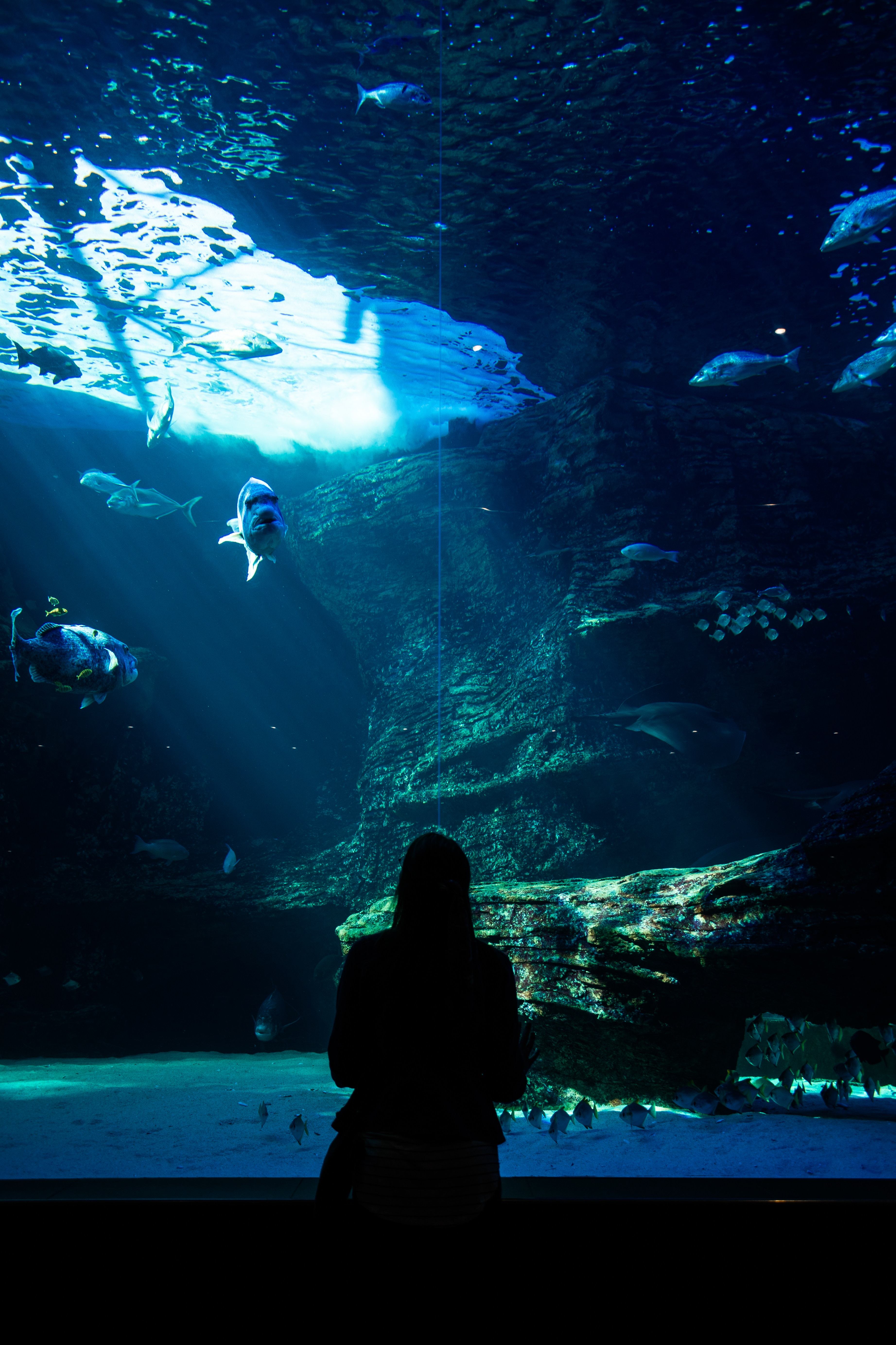 131160 download wallpaper Fishes, Dark, Silhouette, Underwater World, Aquarium screensavers and pictures for free