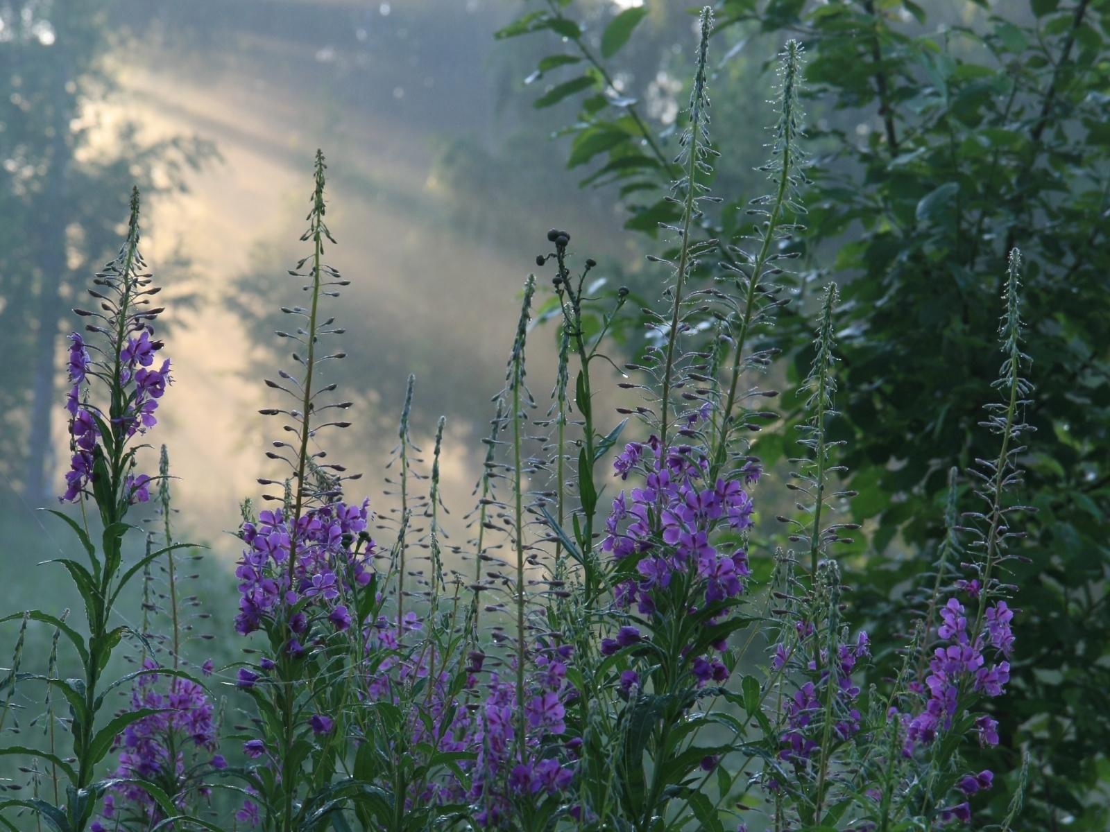 6626 скачать обои Растения, Цветы - заставки и картинки бесплатно