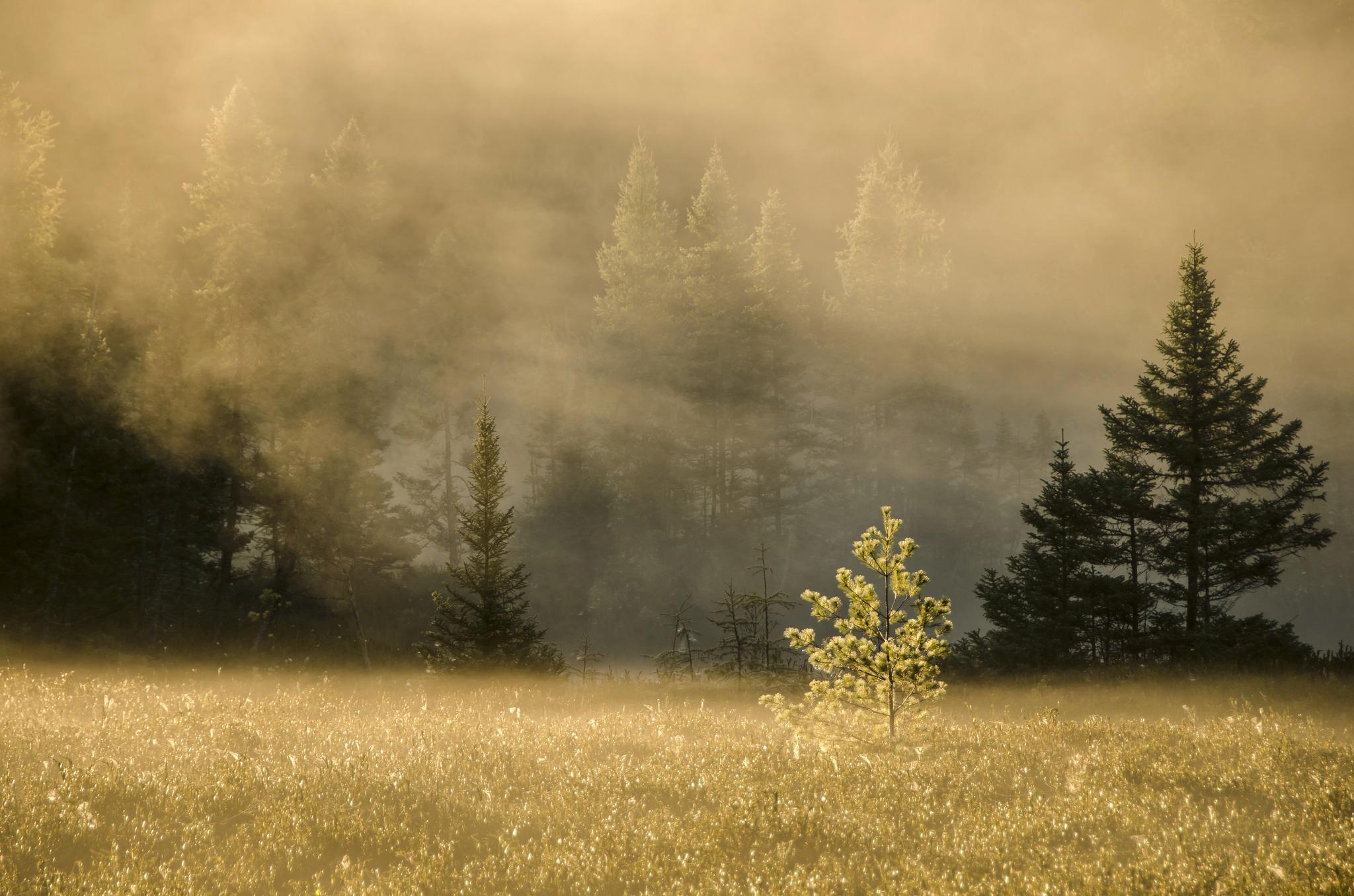 155630 fond d'écran 1080x2400 sur votre téléphone gratuitement, téléchargez des images Nature, Arbres, Herbe, Forêt, Brouillard 1080x2400 sur votre mobile