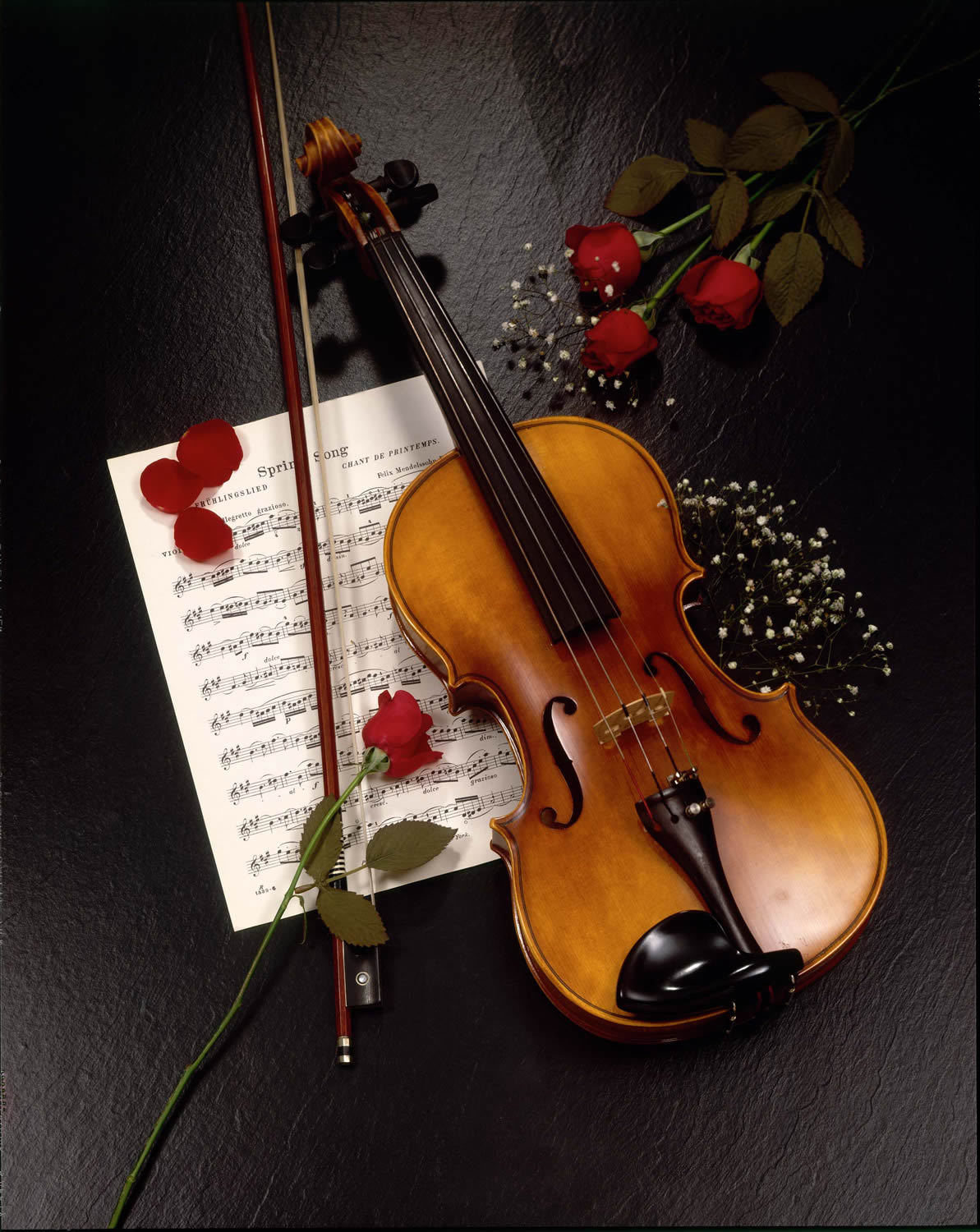 21786 download wallpaper Music, Flowers, Roses, Tools, Objects, Violins screensavers and pictures for free