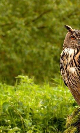 149206 download wallpaper Animals, Owl, Bird, Grass, Greens, Predator screensavers and pictures for free