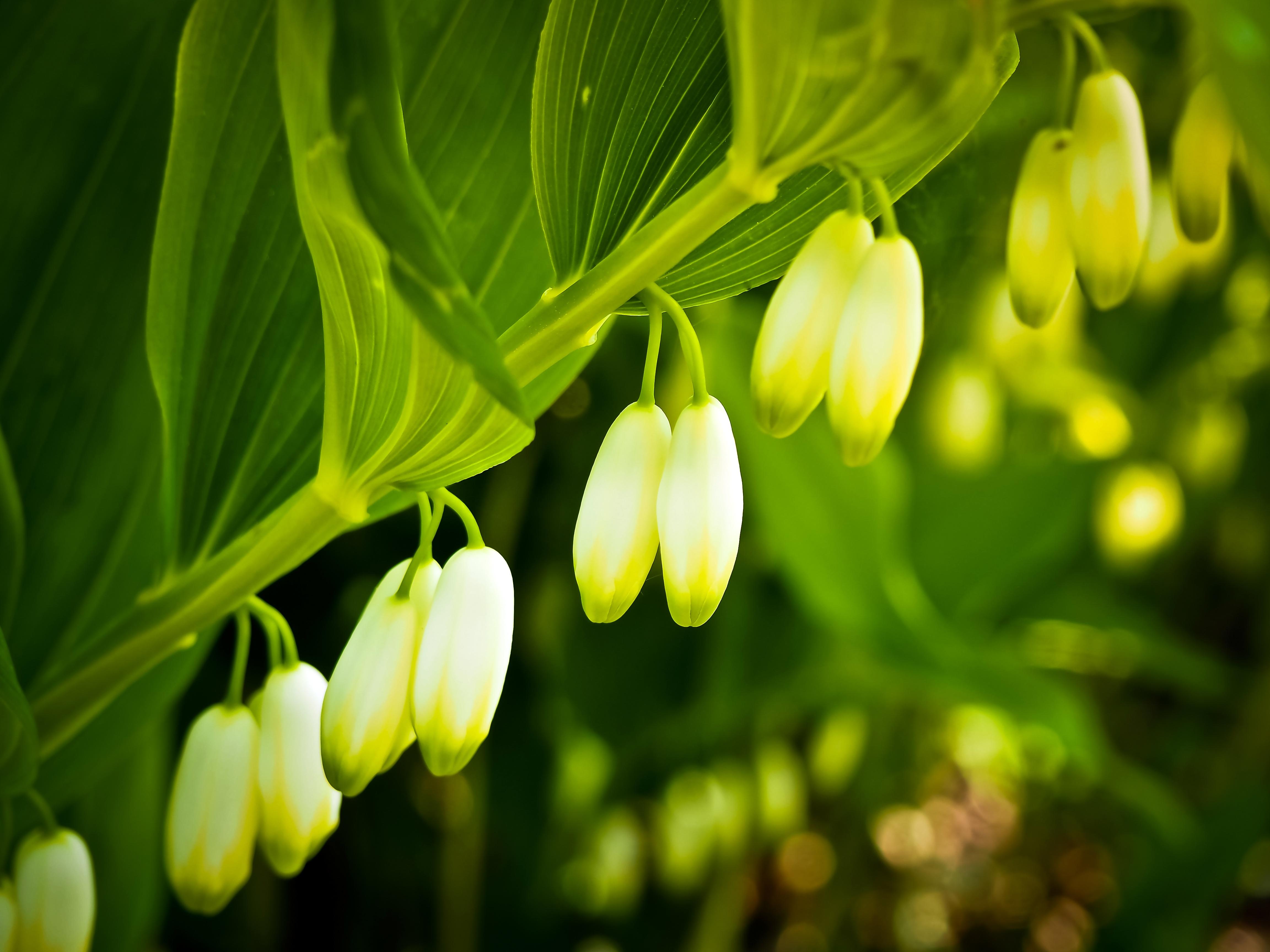 99252 Hintergrundbild herunterladen Blumen, Blätter, Maiglöckchen, Makro, Ast, Zweig - Bildschirmschoner und Bilder kostenlos