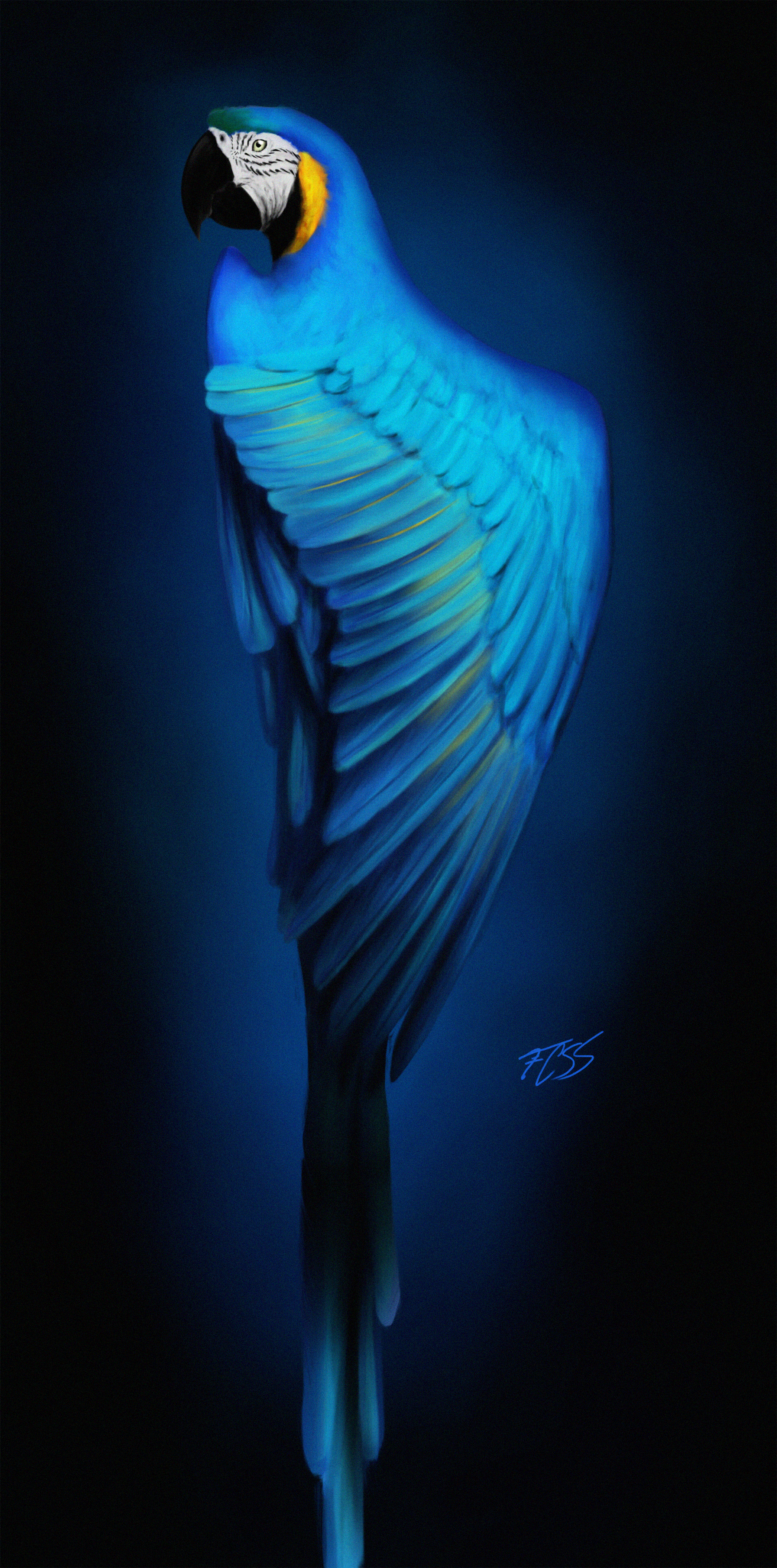 110803 Screensavers and Wallpapers Parrots for phone. Download Parrots, Art, Bird, Macaw pictures for free