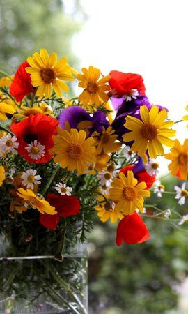 151865 скачать обои Цветы, Ромашки, Маки, Ирисы, Букет, Лето, Ваза - заставки и картинки бесплатно