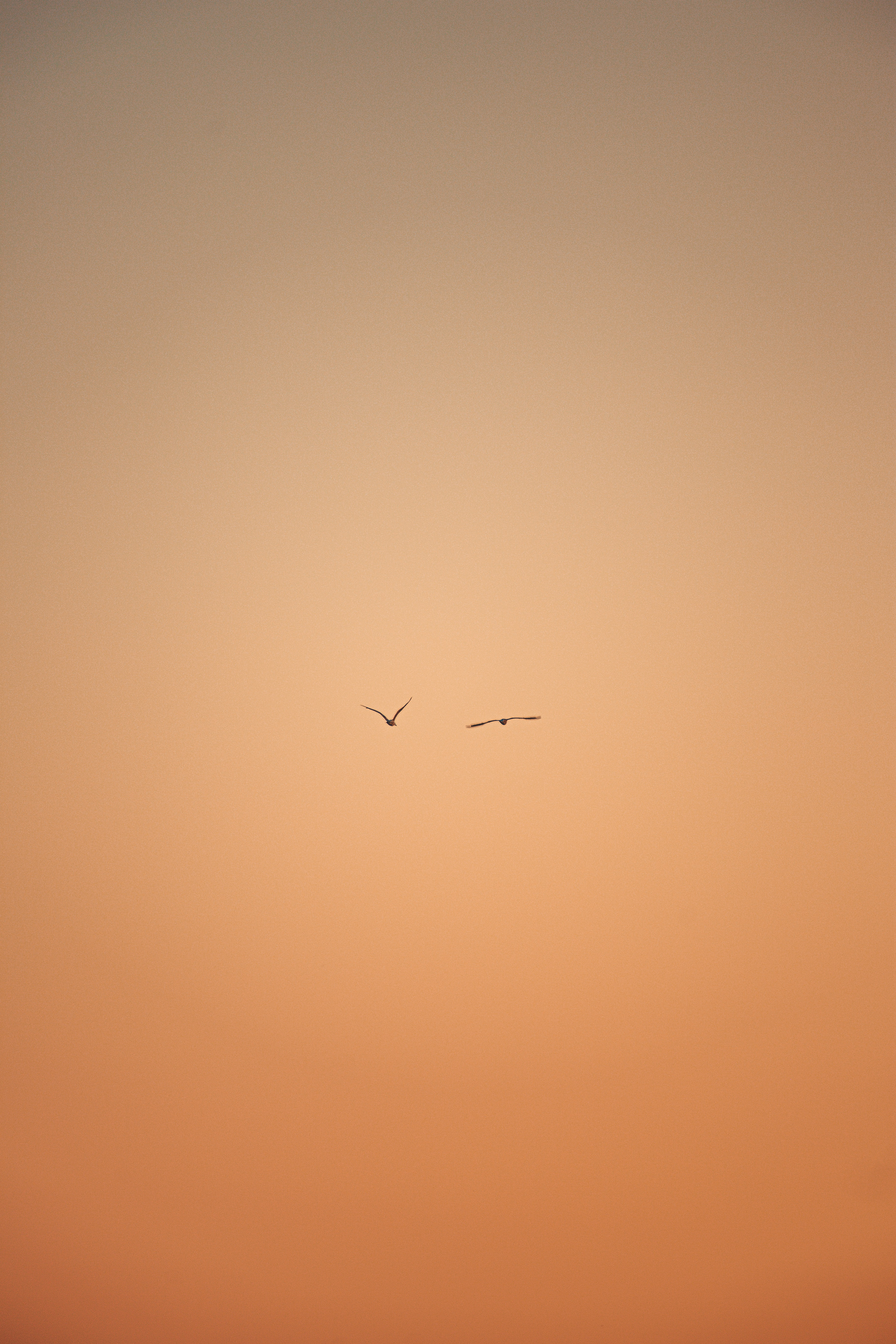 134702 download wallpaper Minimalism, Flight, Sky, Birds screensavers and pictures for free