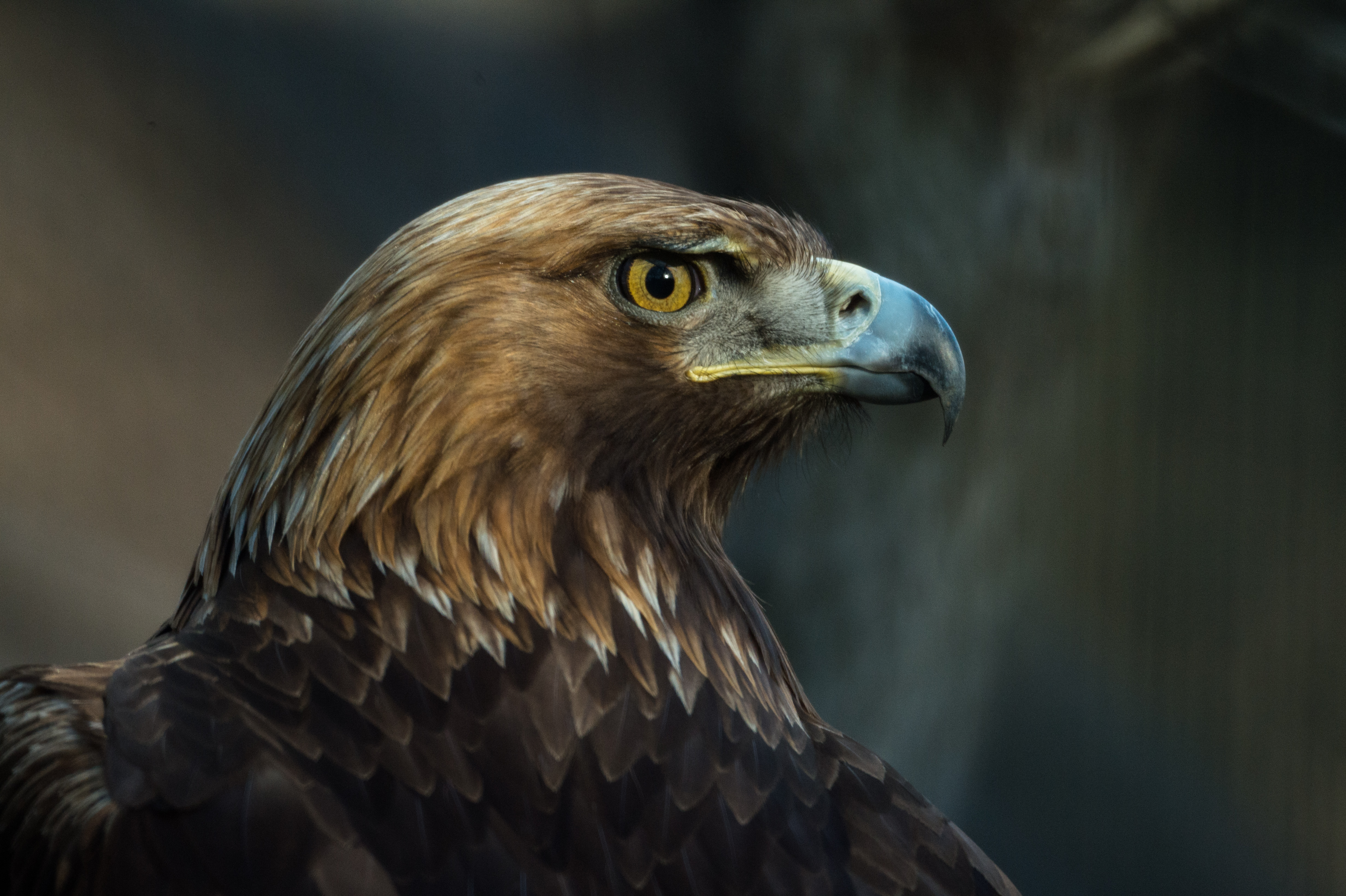 130549 Screensavers and Wallpapers Bird for phone. Download Animals, Bird, Beak, Predator, Sight, Opinion, Eagle pictures for free