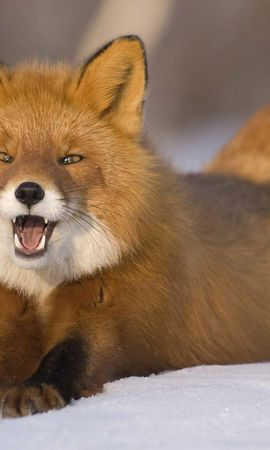 120673 download wallpaper Animals, Fox, Redhead, Young, Snow, To Lie Down, Lie, Funny screensavers and pictures for free